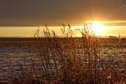Sunset On Field Print by Christy Patino