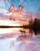 Moose Digital Art Prints - Sunset On Moose Pond Print by John Stephens