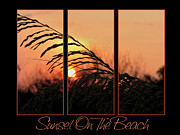 Sea Oats Prints - Sunset On The Beach Print by Carolyn Marshall