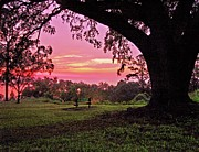 Alabama Crimson Tide Prints - Sunset on the Bench Print by Michael Thomas
