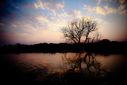Fauna Originals - Sunset on the Okavango River  by Isabel Laurent