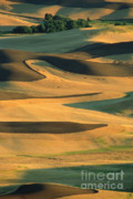 Palouse Photos - Sunset on the Palouse by Sandra Bronstein
