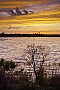Evening Photographs Framed Prints - Sunset on the Wetlands Framed Print by Rob Travis