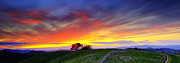 Walnut Tree Photograph Posters - Sunset on top of Hillock 6x17 Pano Poster by Laszlo Rekasi