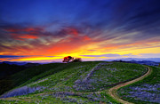 Walnut Tree Photograph Prints - Sunset on top of Hillock Print by Laszlo Rekasi
