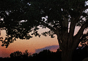 Devils Den Framed Prints - Sunset over a witness tree Framed Print by Dave Sandt
