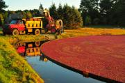 Reflection Harvest Posters - Sunset over Cranberry Bog Poster by Catherine Reusch  Daley