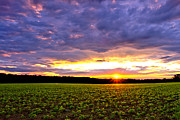 Field. Cloud Posters - Sunset over Farmland Poster by Olivier Le Queinec