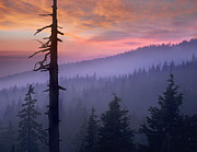 Crater Lake Sunset Photos - Sunset Over Forest Crater Lake National by Tim Fitzharris