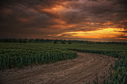 Cornfield Photos - Sunset over Iden by Lee-Anne Rafferty-Evans