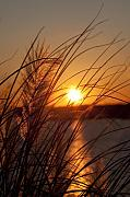 Pampas Grass Prints - Sunset over Lake Wylie SC Print by Dustin K Ryan