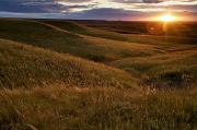 Landscape Plants Prints - Sunset Over The Kansas Prairie Print by Jim Richardson