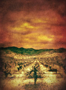 Vineyard In Napa Prints - Sunset Over Vineyard Print by Jill Battaglia