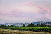 Vineyard Digital Art - Sunset over Vineyard by Karen  W Meyer