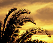 Carolyn Marshall Posters - Sunset Palms Poster by Carolyn Marshall