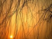 Winter Sleep Photos - Sunset Peers Through The Branches by Justin Guariglia