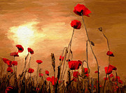 Flowery Framed Prints - Sunset Poppies Framed Print by James Shepherd