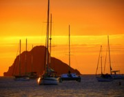 Yellow Sailboats Posters - Sunset Sails Poster by Karen Wiles