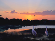 Cranes Originals - Sunset Serenity by Adele Moscaritolo