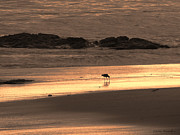 Pretty Colored Bird Photos - Sunset Shimmer Beach by Debra     Vatalaro