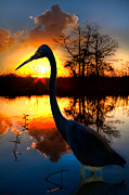 Herons Metal Prints - Sunset Silhouette Metal Print by Debra and Dave Vanderlaan