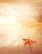 Photomanipulation Digital Art Prints - Sunset Star Fish Print by Lee-Anne Rafferty-Evans