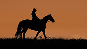 Trot Photos - Sunset Stroll by David  Naman