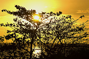 Mauritius Photos - Sunset through leaves by Steeve Dubois