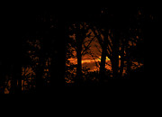 Paul Howarth - Sunset Through The Trees
