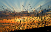 Sue Brehant Framed Prints - Sunset Thru the Grass Framed Print by Sue  Brehant