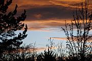 Sunset Scenes. Originals - Sunset Thru The Trees by Rob Hans