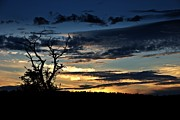 Stephen Clarridge Metal Prints - Sunset tree 1 Metal Print by Stephen Clarridge