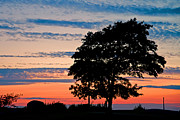 David Freuthal Posters - Sunset tree Poster by David Freuthal