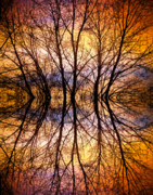 Tree Posters Photos - Sunset Tree Silhouette Abstract 1 by James Bo Insogna