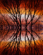 Tree Posters Prints - Sunset Tree Silhouette Abstract 2 Print by James Bo Insogna