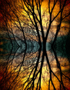 Tree Posters Prints - Sunset Tree Silhouette Abstract 3 Print by James Bo Insogna
