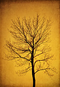 Tree In Golden Light Posters - Sunset Tree Silhouette Poster by Cheryl Davis