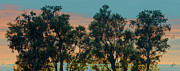 Panoramic Digital Art - Sunset Trees by Ben and Raisa Gertsberg