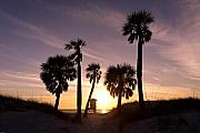 Clearwater Beach Posters - Sunset View Clearwater Beach Florida Poster by George Oze