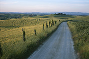 Wheat Fields Prints - Sunset View Of A Gravel Road Winding Print by Taylor S. Kennedy