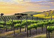 Vine Grapes Posters - Sunset Vineyard Poster by Sharon Foster