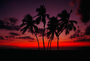 South Seas Posters - Sunset With Palm Trees At The South Poster by Raymond Gehman
