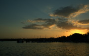 Palatka Photos - Sunset with Sea Life by Kathi Shotwell