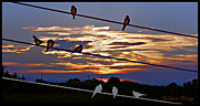 Susan Kinney Art - Sunsets and Birds by Susan Kinney