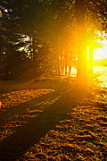Twilight Prints - Sunshine in evening forest near lake Print by Elena Elisseeva