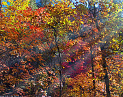 West Fork Digital Art - Sunshine in the Trees by Brian Lambert