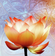 Yellow  Digital Art Posters - Sunshine Lotus Poster by Photodream Art