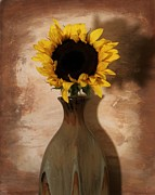 Histogram Photos - Sunshine on My Sunflower by Marsha Heiken