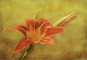 Lilies Digital Art - Sunshine by Reflective Moments  Photography and Digital Art Images