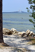 Sunshine Skyway Bridge Prints - Sunshine Skyway from the Causeway Print by Carol Groenen